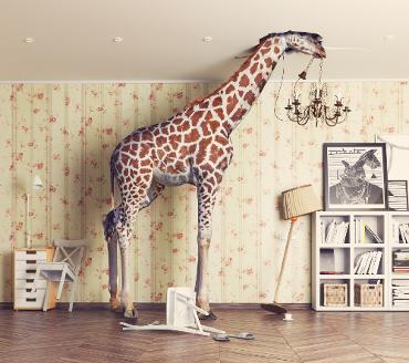 Giraffe richtet Schaden an